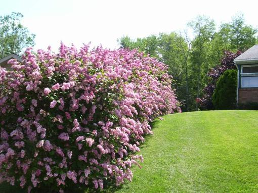 Guidelines for Selecting Seedlings and Planting Shrubs