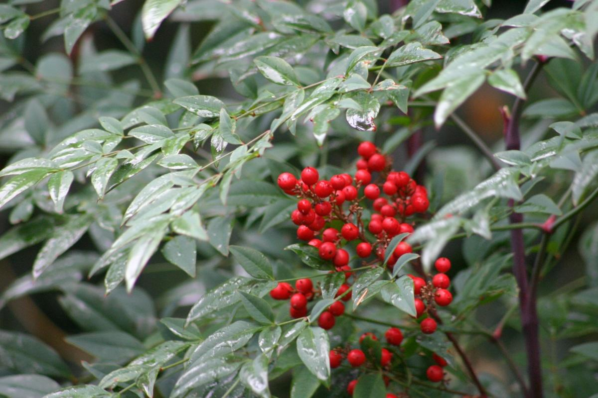 Features of Pruning Shrubs (part 3)