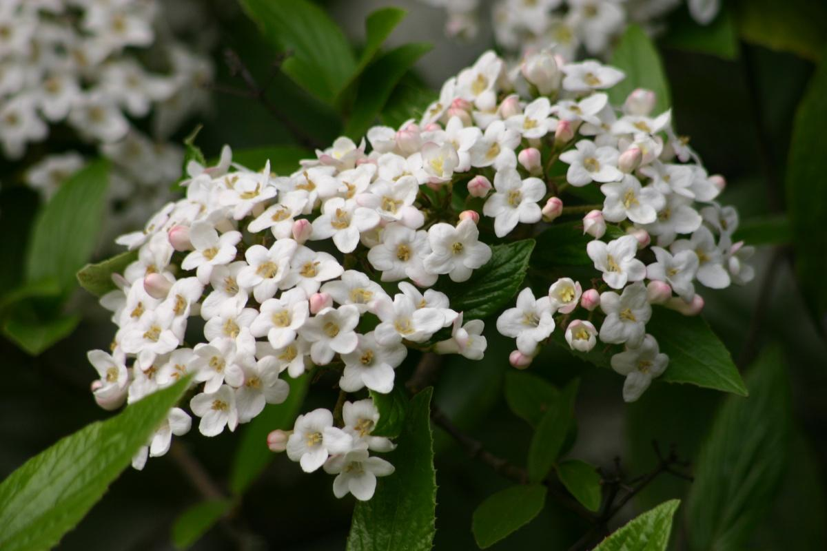 Features of Pruning Shrubs (part 2)