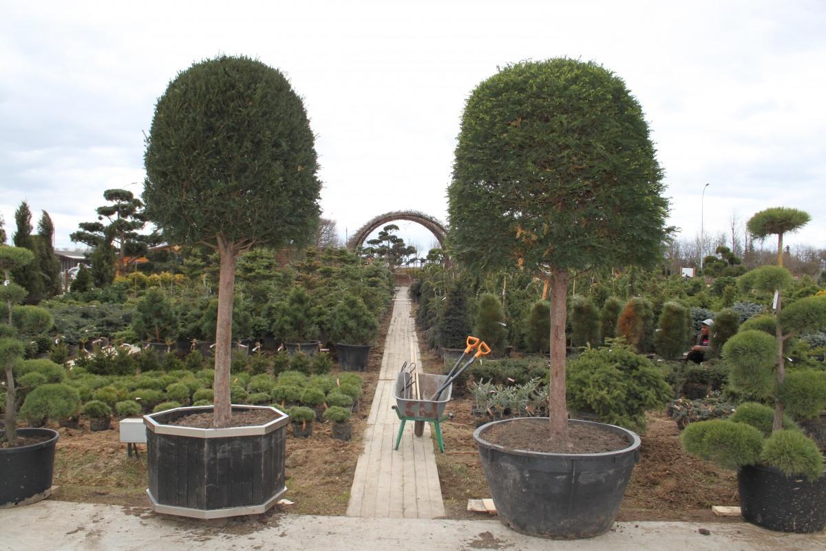 Excursion to the Garden Centre Imperial Garden