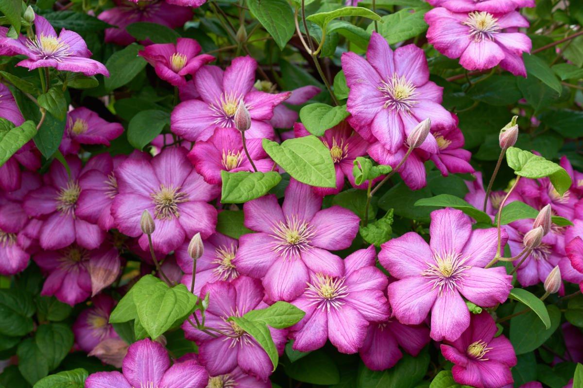 Plants for Vertical Gardening