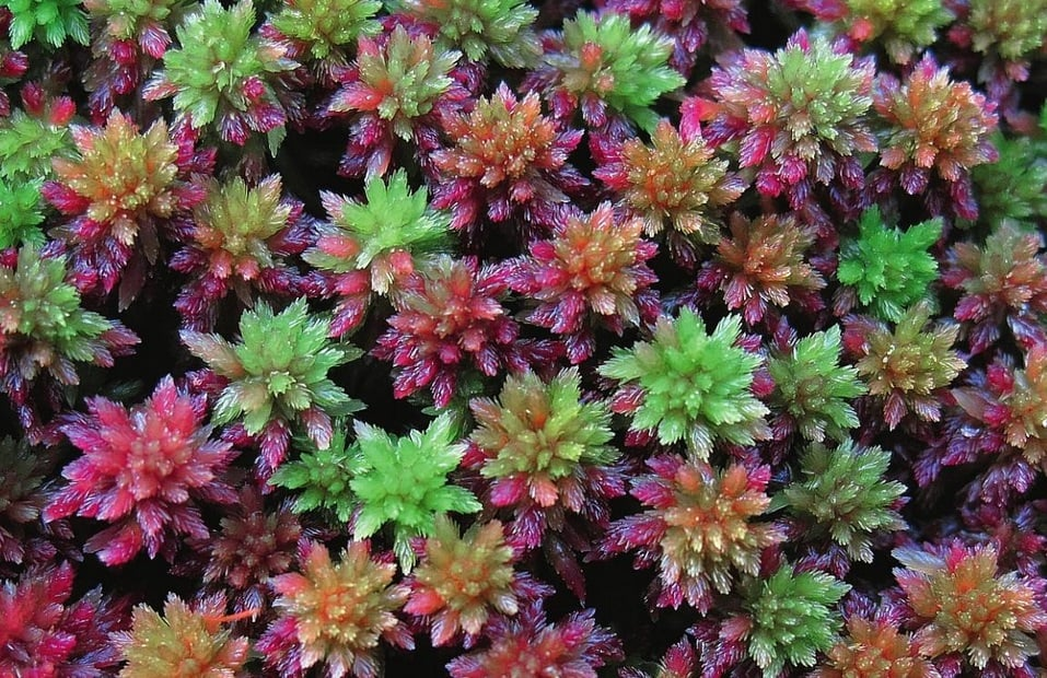 The Species of Mosses and Their Habitats