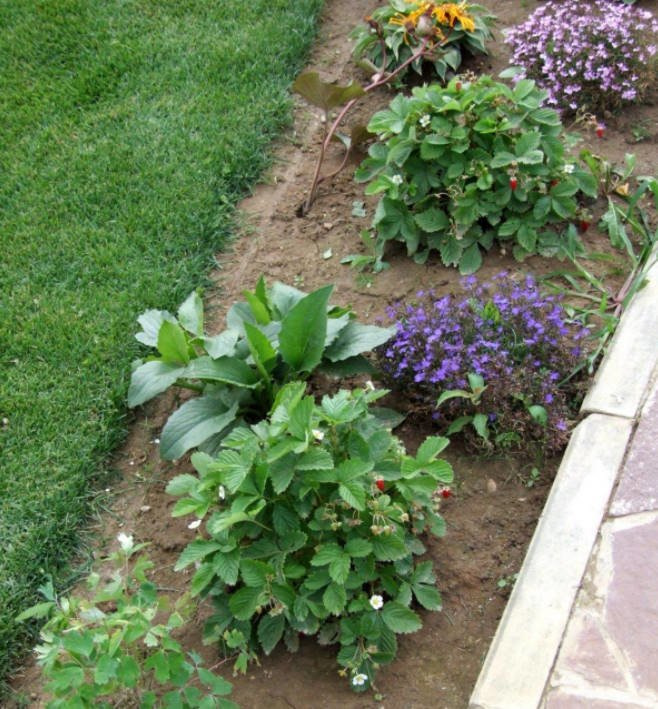 Common Mistakes in Garden Design: Accessories, Mirrors and Planting Rows of Plants