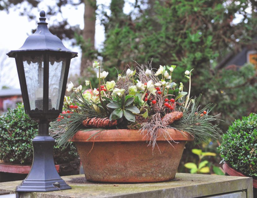 In Anticipation of Miracles: Decorate the Garden for the New Year and Christmas
