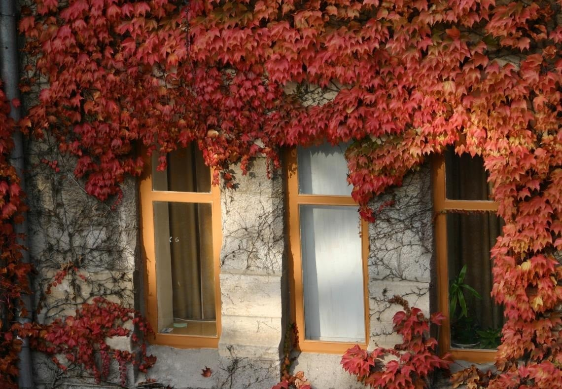 House With Grapes