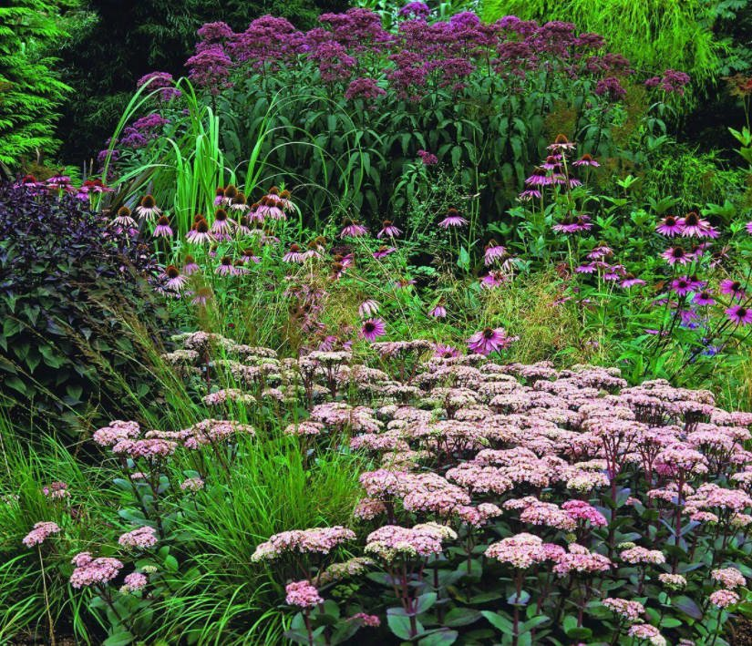 From the Upper Class: Lush Handsome Eupatorium