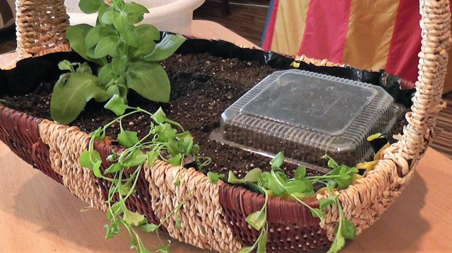 Baskets and Pots With Petunias: Plant Correctly