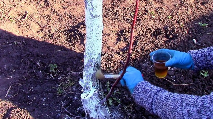 Creolin to Protect Fruit Trees from Pests