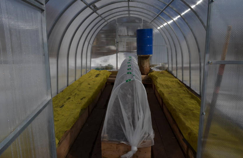 How to Arrange an Effective Drip Irrigation in the Greenhouse