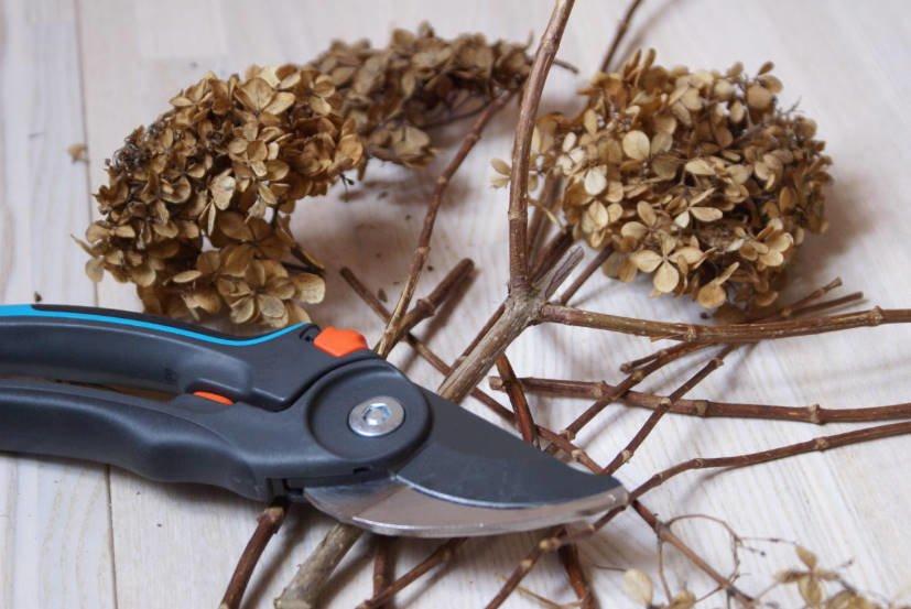 How to prune Hydrangea paniculata 1 - How to Prune Hydrangea Paniculata