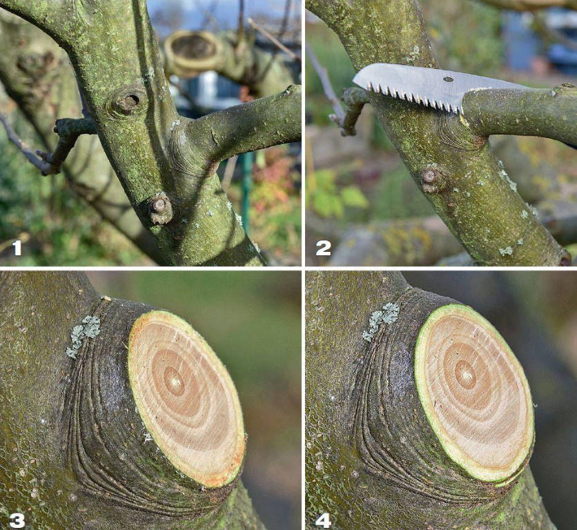 Seven Times Measure, or the ABCs of Pruning