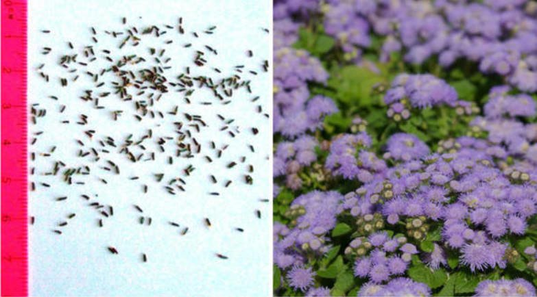 Some Features of Sowing Small Seeds