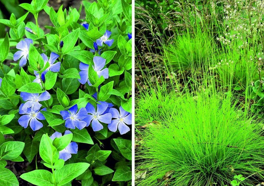 Fashion Trend: Cereals and Other Ornamental Plants for the Village Garden