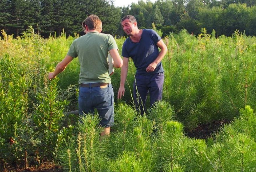 Scientific Justification of the Use of Mixed Plantings