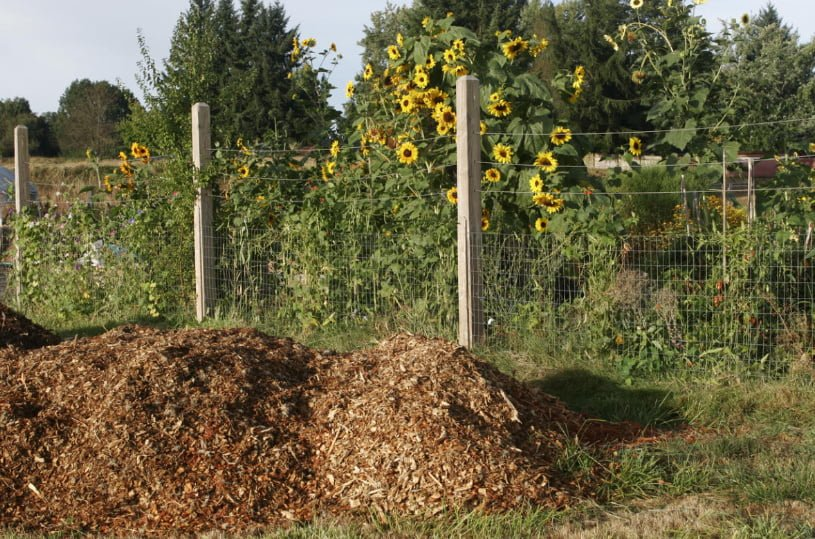 The Enemy of the Summer Resident is Elytrigia. How to Win Against It?
