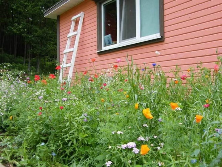 Unusual Lawns 3 Moorish Lawn And White Clover Pros Cons