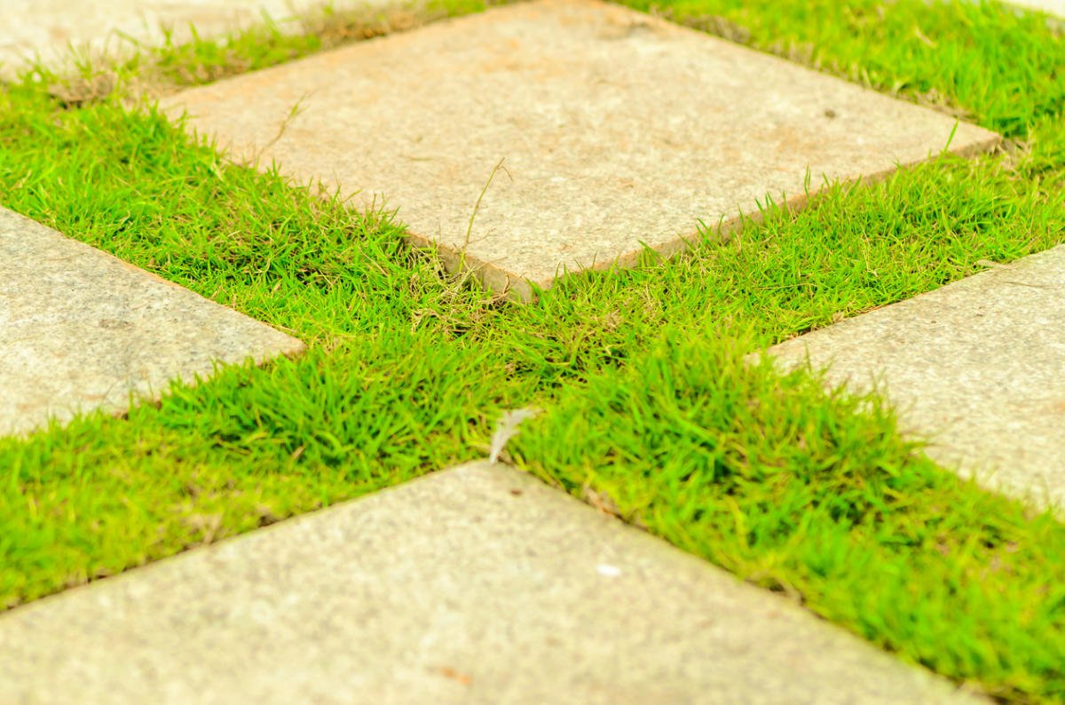 Paths in Your Garden