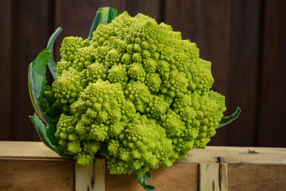 Cauliflower: Cultivation, Care, Varieties