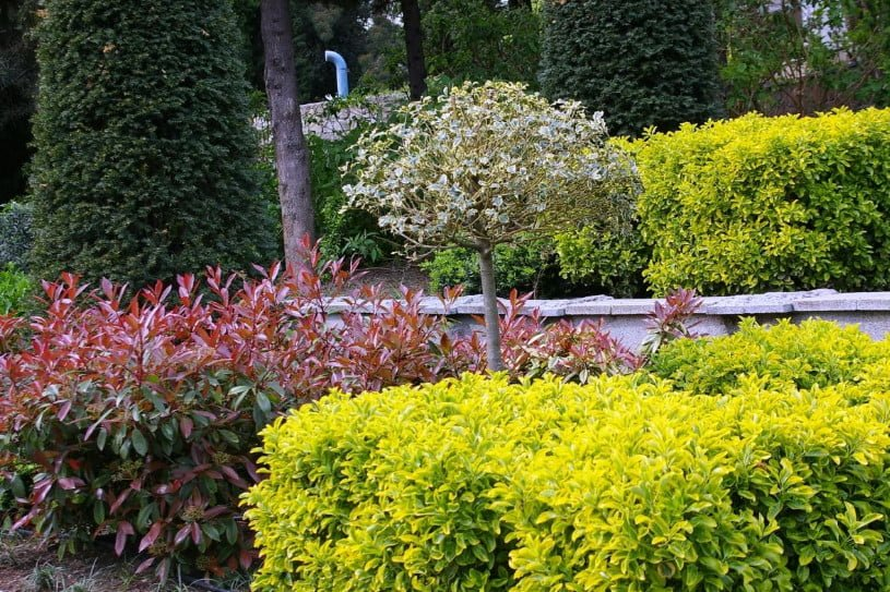 Trees And Shrubs With Yellow Leaves Photos Names Features Of