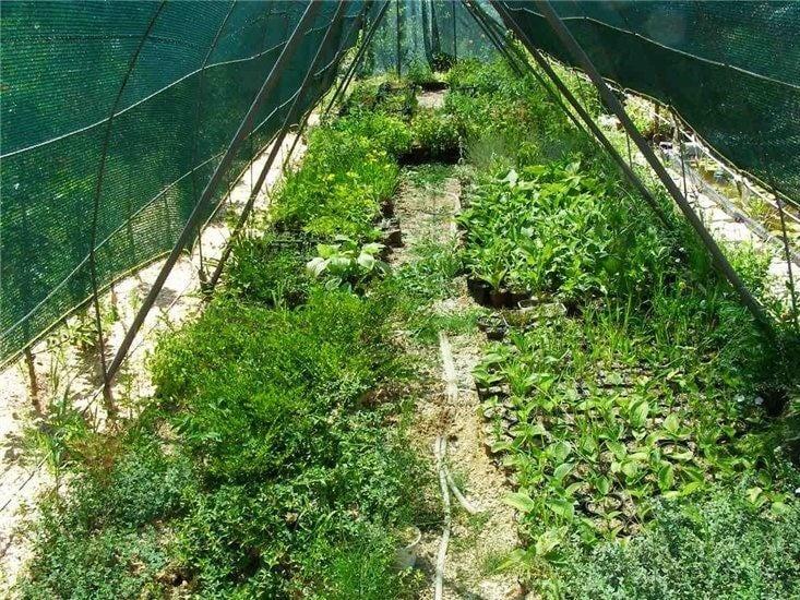 Growing Seedlings of Perennials