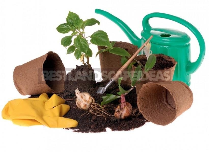 Features of the Use of Peat as Fertilizer
