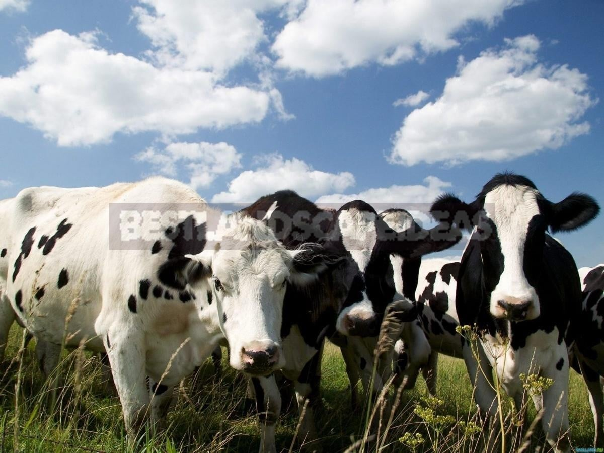 Manure is the King of Organic Fertilizers
