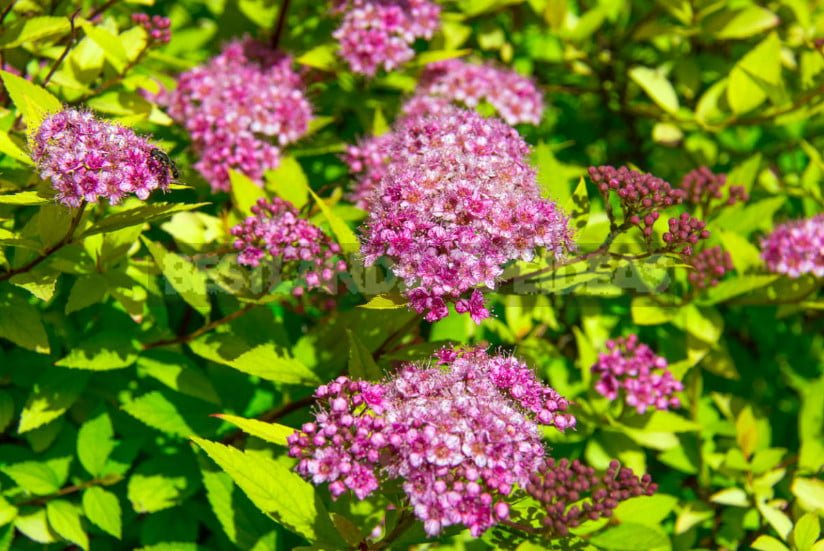 Re-Flowering: What Plants Bloom Again and How to Help Them