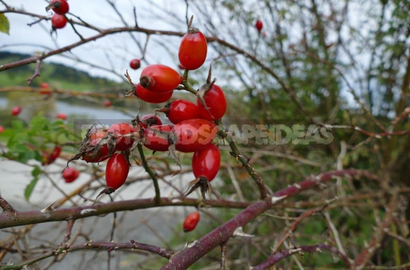 Diseases and Pests of Plants: Autumn Analysis of the Problem