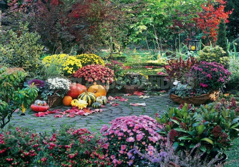 How To Prepare Perennials For Winter Best Landscaping Ideas