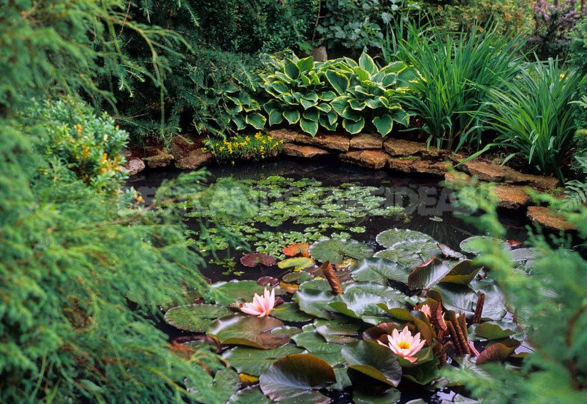 Pond in the Garden: Choose Materials and Equipment (Part 2)