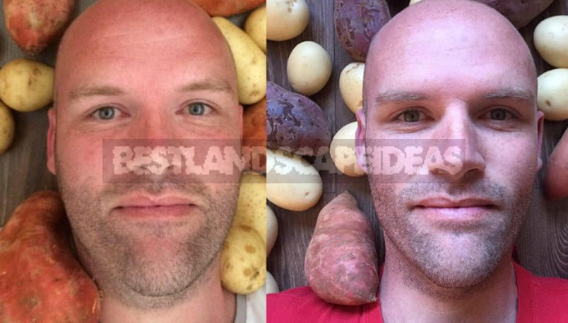 Potato Diet: How Andrew Taylor Lost Weight