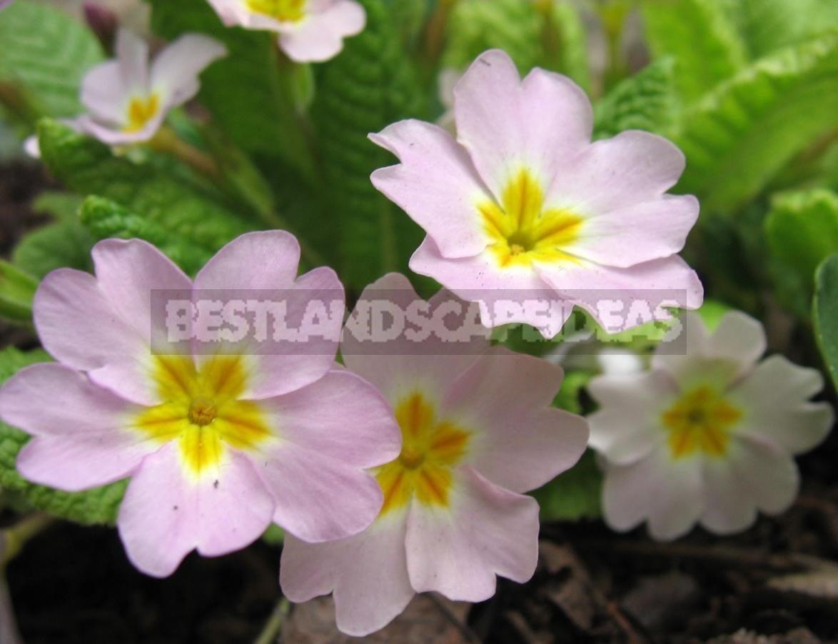 Flower Perennials For Shady Flower Garden Best Landscaping Ideas