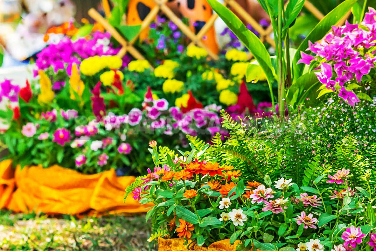 Flowers for Growing on Flower Beds - Best Landscape Ideas