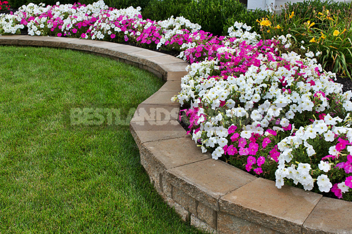 Flowers for Growing on Flower Beds