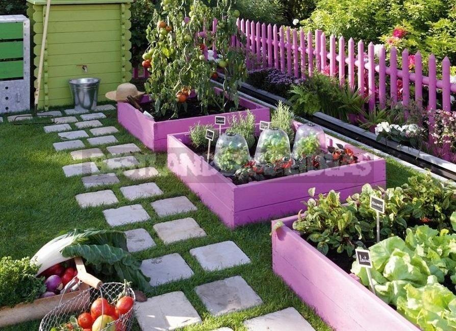 Non-Standard Examples of Kitchen Gardens Design