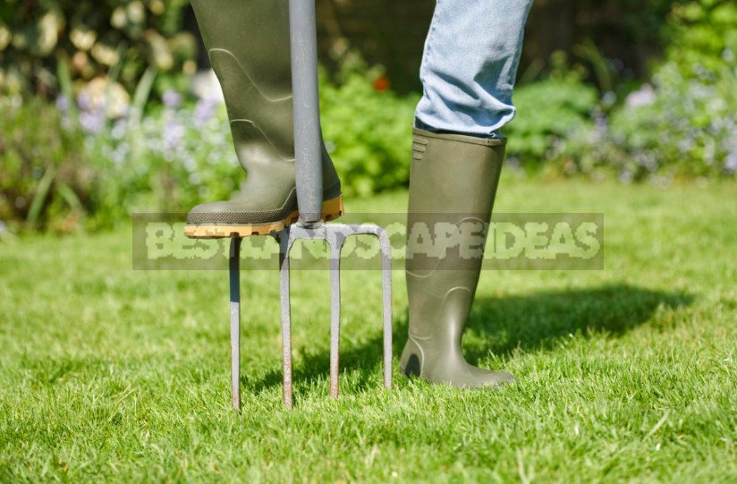 Autumn Lawn Care: What You Need to Do
