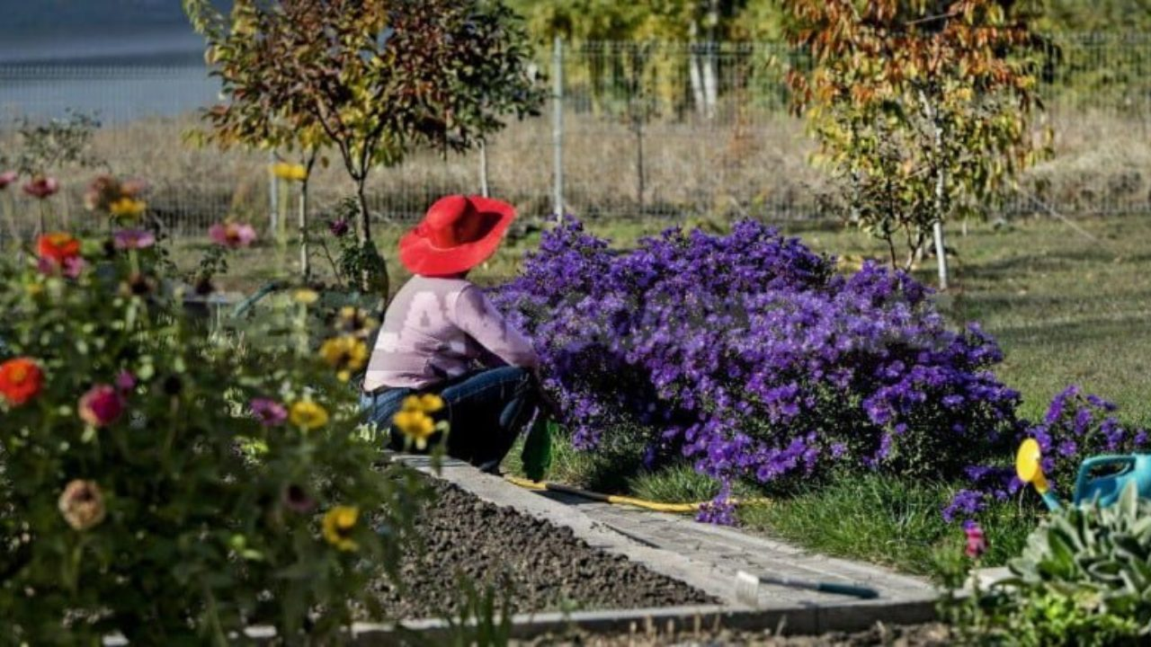 it's time to rest: preparing perennials for winter - best