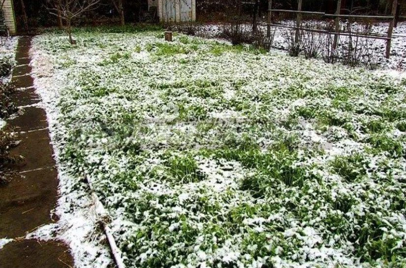 Organic Fertilizers: Choose Useful for the Soil