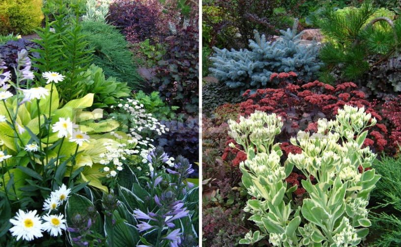 Flower Beds: Spectacular Compositions Based on Contrasts of Color and Shape