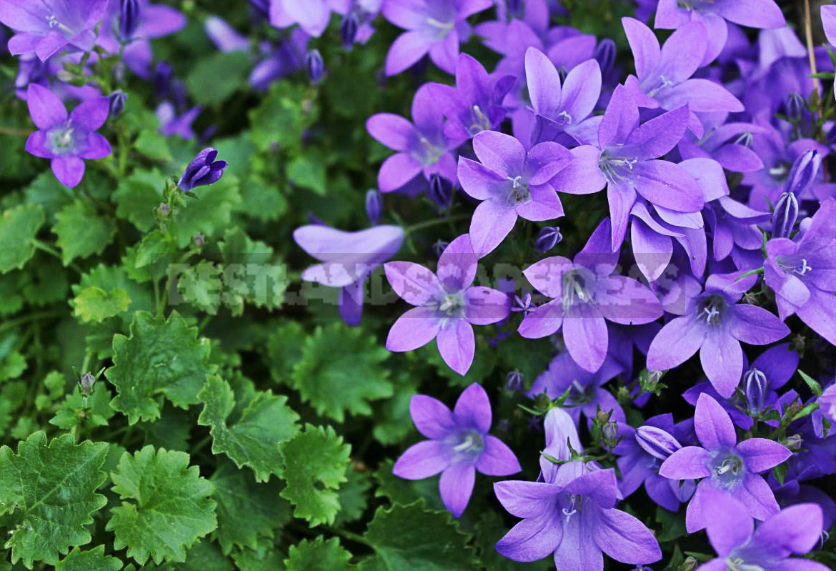 TOP the Best Plants For Your Flower Bed