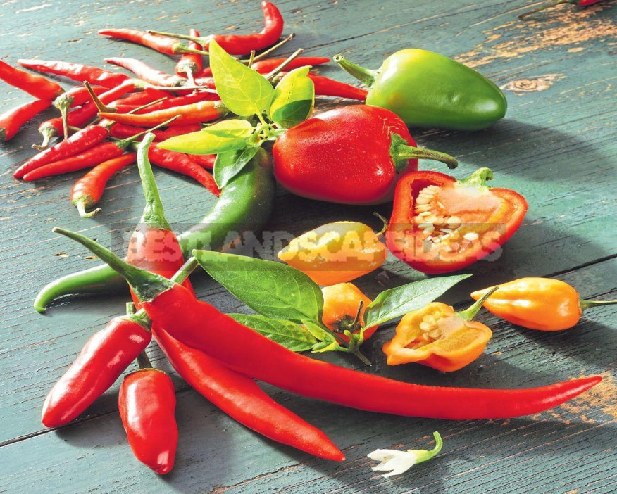 Add Spice: Varieties of Bitter Pepper