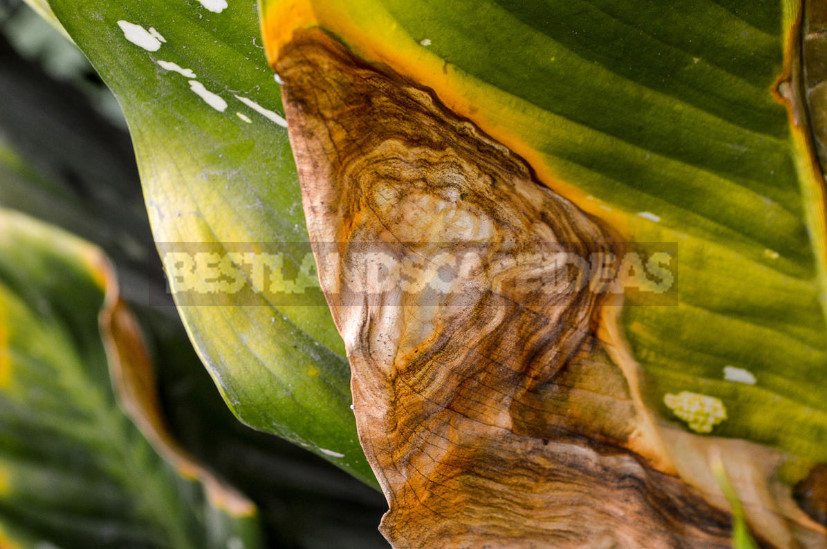 Houseplants: Identify Problems by Leaves