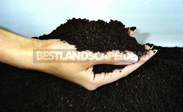 01 - Autumn Soil Treatment