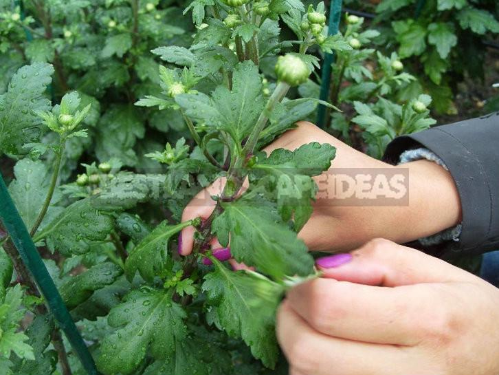 Seasonal Work in the Garden: Mid-October