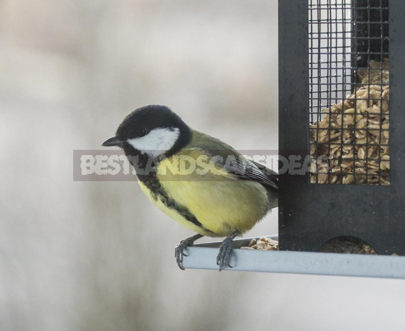 How to Feed Birds in Winter: Feed and Feeders