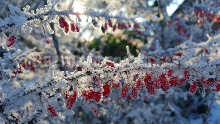 The Garden in Winter: Characteristics of Landscape Design