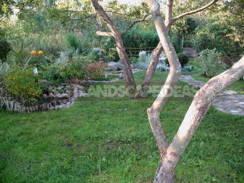 Old Apple Trees Through the Eyes of a Landscape Designer (Part 2)