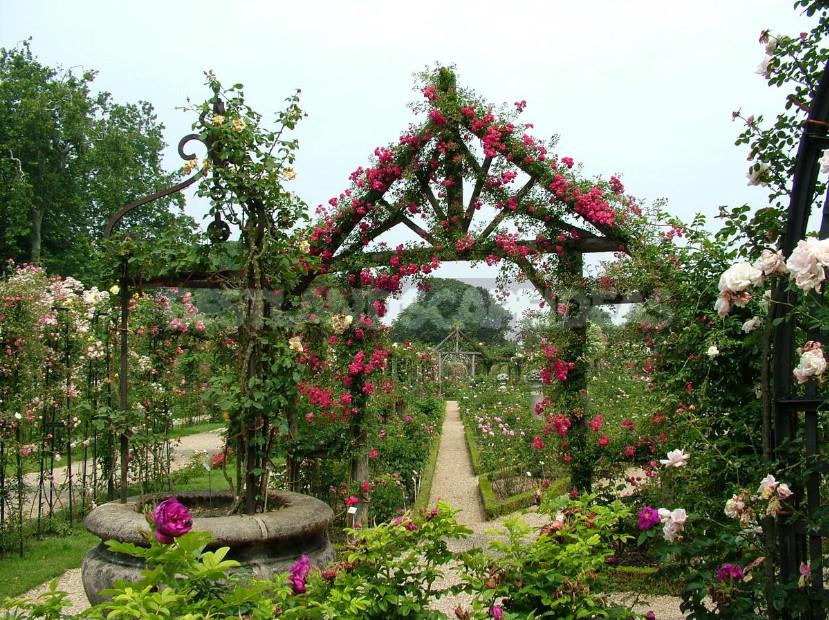 Rose garden elements of regular style 1 - Rose Garden: Elements of Regular Style