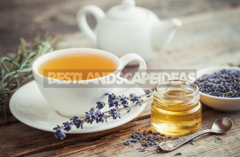 Plants for Insomnia: Recipes Remedies