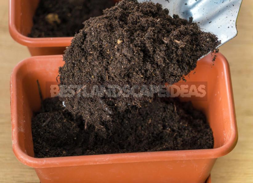 Grow the Seedlings Pepper